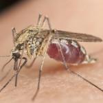 Der Artikel gibt Tipps um sich vor Insekten zu schützen.