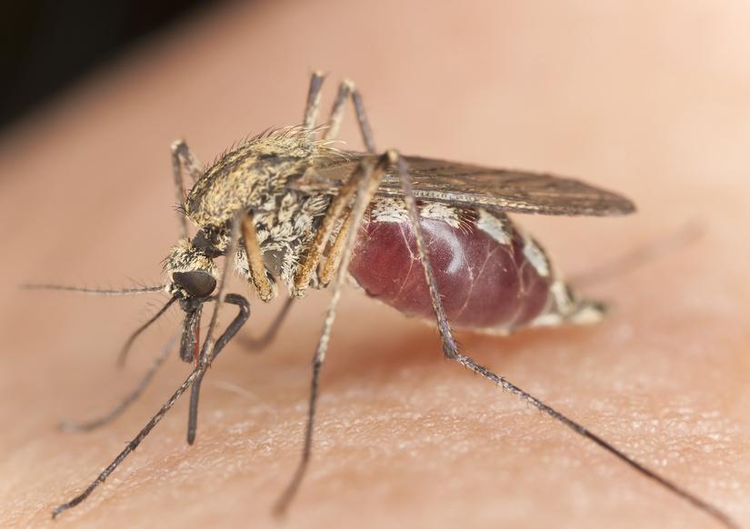 UV-Licht vertreibt lästige Insekten