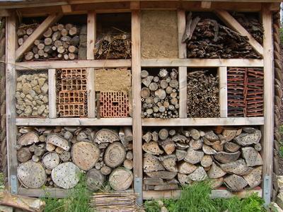 Insektenhotel selbst bauen – Tipps und Wissenswertes