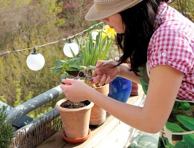Pflanz' dir den nächsten Frühling schon jetzt