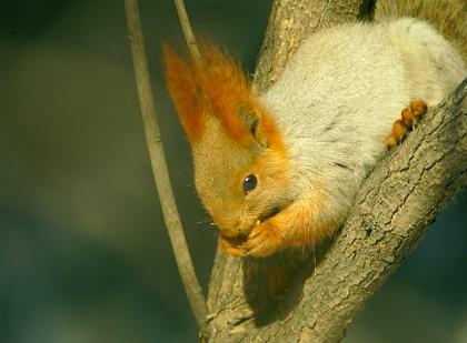 Ein Futterhaus für Eichhörnchen – so einfach geht's