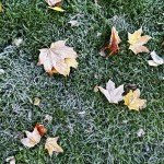 Der Artikel beschreibt mögliche Schäden durch einen warmen Winter.