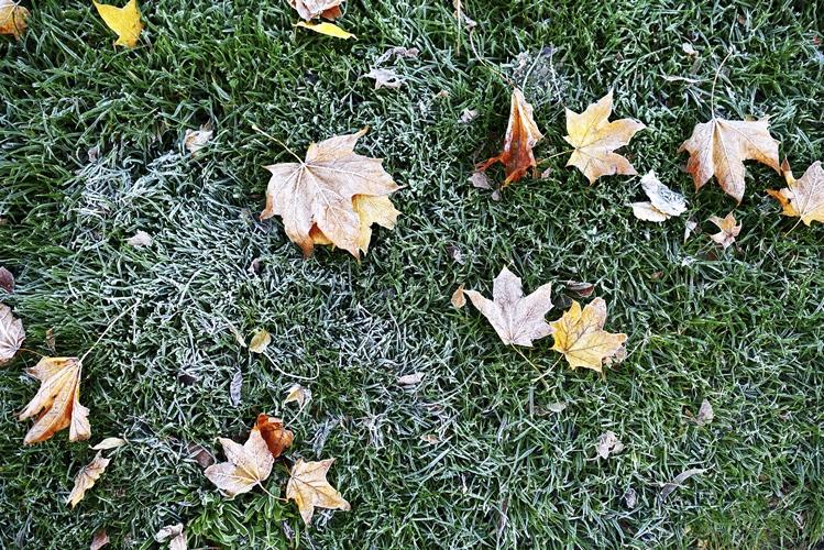Ein warmer Winter schadet dem Garten