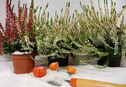 Überlebenswichtig – Der Frostschutz für Pflanzen im Frühjahr