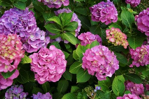 Diese Blumen gedeihen sogar im Schatten