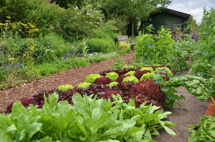 Nutzbeete – frisches Gemüse aus eigenem Anbau
