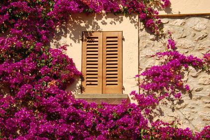 Mit Kletterpflanzen die Hausfassade verschönern