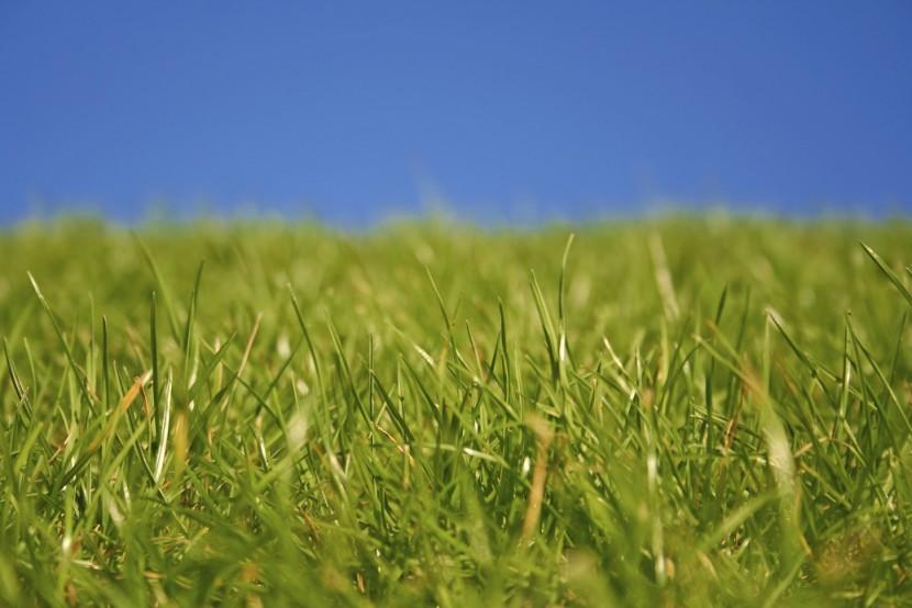 Rasen kalken – das müssen Sie wissen