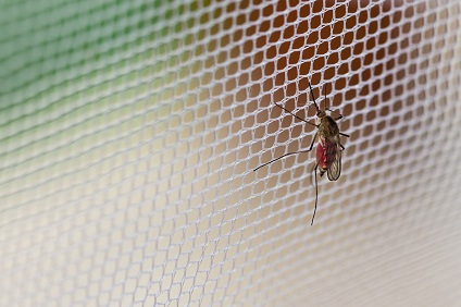 Insektenschutz: So bleiben Stechmücken & Co. draußen