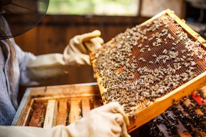 So bauen Sie eine Bienenkiste!
