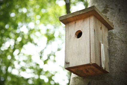 Für die Gartenvögel: Nistkästen bauen