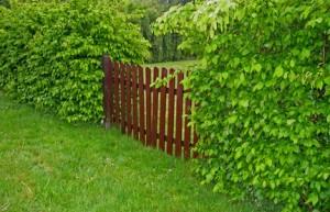 Mein schöner Garten – Grundstücke begrenzen